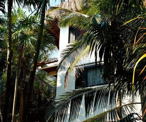 palms, house, and palm trees image