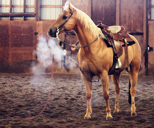 horse, beautiful, and western image