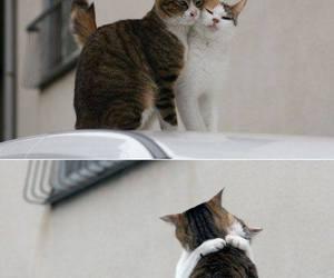 cat, love, and hug image