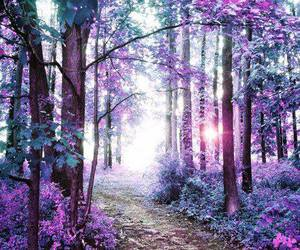 purple and forest image