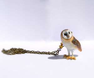 owl, accesoires, and owl necklace image