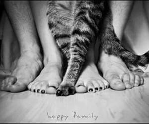 beautiful, black & white, and cat image