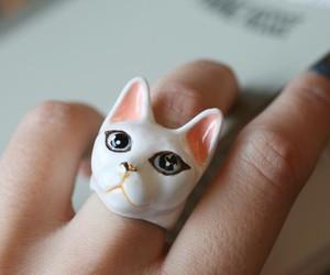 beautiful, cat, and crazy image
