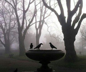 crows, bird, and creepy image
