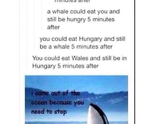 funny and funny tumblr post image