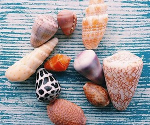shells, beach, and summer image