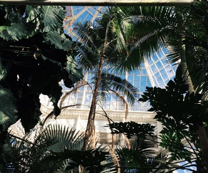 green, palm trees, and palms image