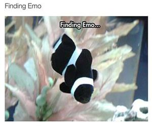 animals, disney, and emo image