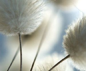 nature, white, and flowers image