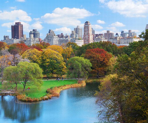 Central Park, nature, and new york image