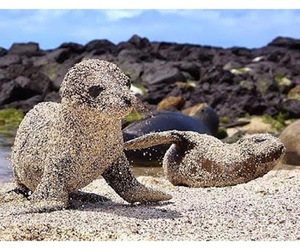 animals, baby, and sand image