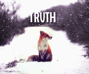 fox, snow, and truth image