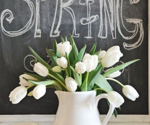 spring, flowers, and white image