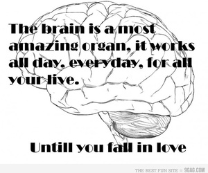 love, brain, and text image