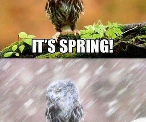 spring, owl, and funny image