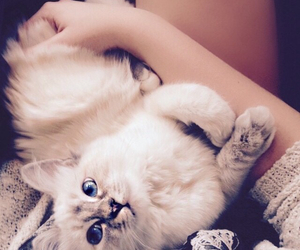 baby, blue, and cat image