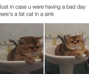 cat, funny, and bad day image