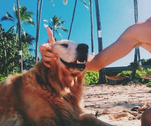 dog, beach, and summer image
