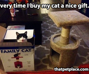 awesome, box, and meow image