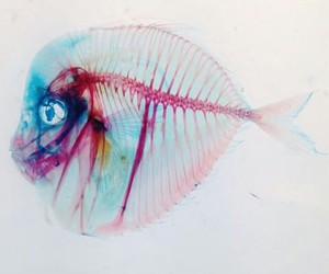 cool, fish, and painting image