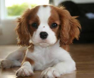 dog and beautiful image