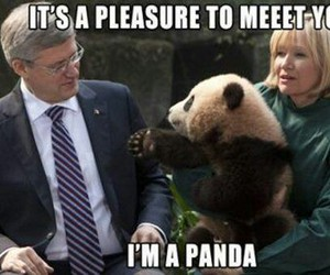 panda, funny, and animal image