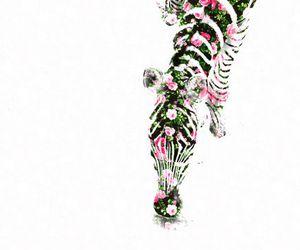 zebra, flowers, and animal image
