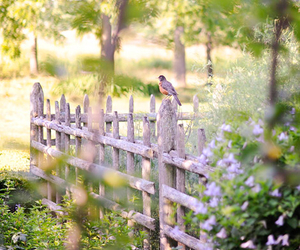 bird, flowers, and fence image