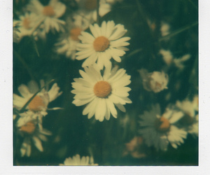 daisy, dreamy, and flowers image
