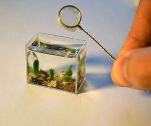 aquarium, fish, and miniature image