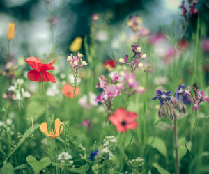 flowers, nature, and plants image