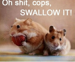cops, funny, and hamster image