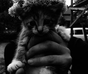 cat, tumblr, and hipster image