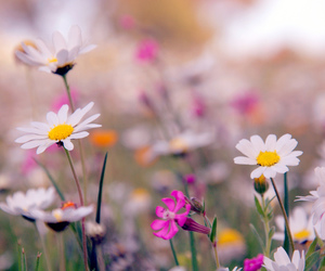 colours, flower, and flowers image