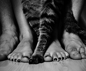 cats love image