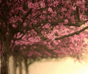 tree, flowers, and pink image