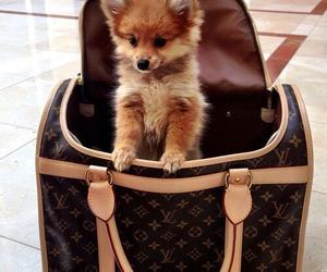 dog, cute, and bag image