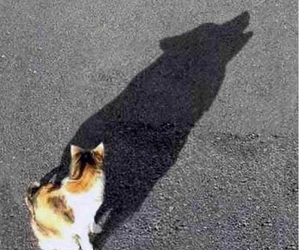 cat, ombre, and wolf image