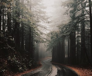 forest, grunge, and nature image