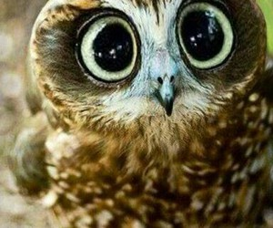 owl cute animal image