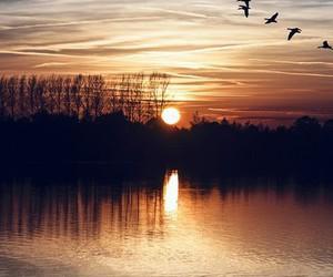 bird, nature, and sunset image