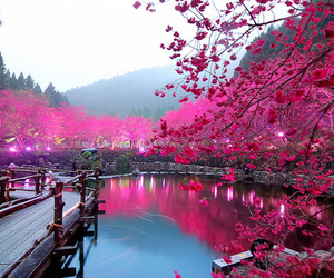 nature, pink, and pretty image
