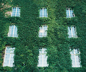 green, windows, and ivy image
