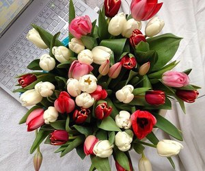 flowers, amazing, and tulips image