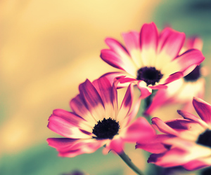 beautiful, flower, and girly image