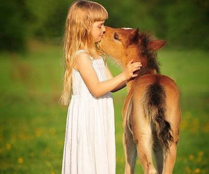 animal, horse, and girl image