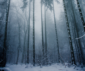 forest, tree, and winter image