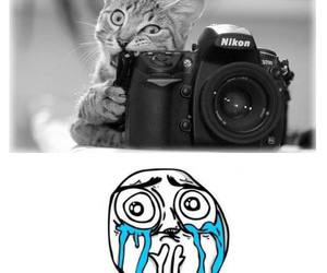 cat, picture, and cute image