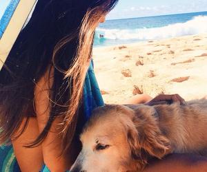 dog, summer, and girl image
