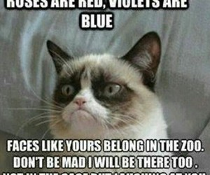 cat, funny, and rose image